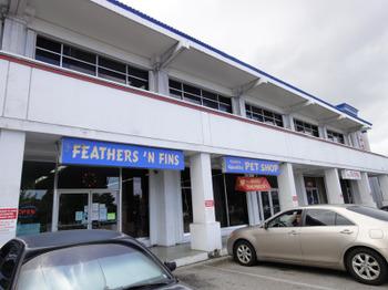 Feathersnfins