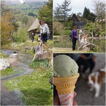 Shirakawa_icecream